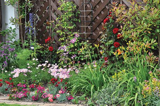 DSC 0010 - Open Gardens 2016